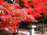 yun_201.jpg